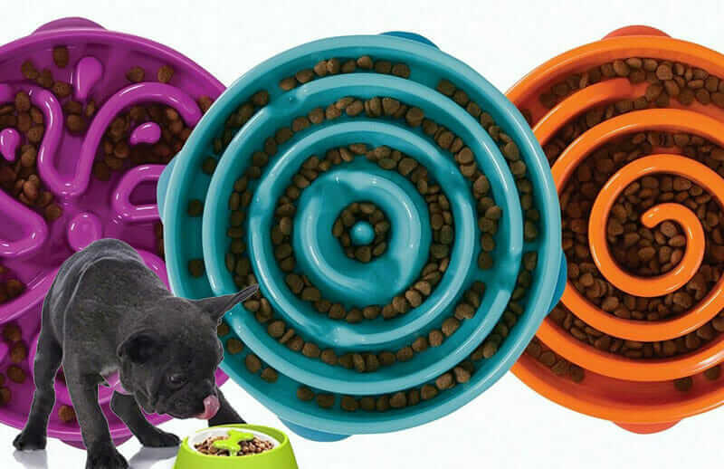 11 Best Slow Feeder Dog Bowls Reviewed In 2019