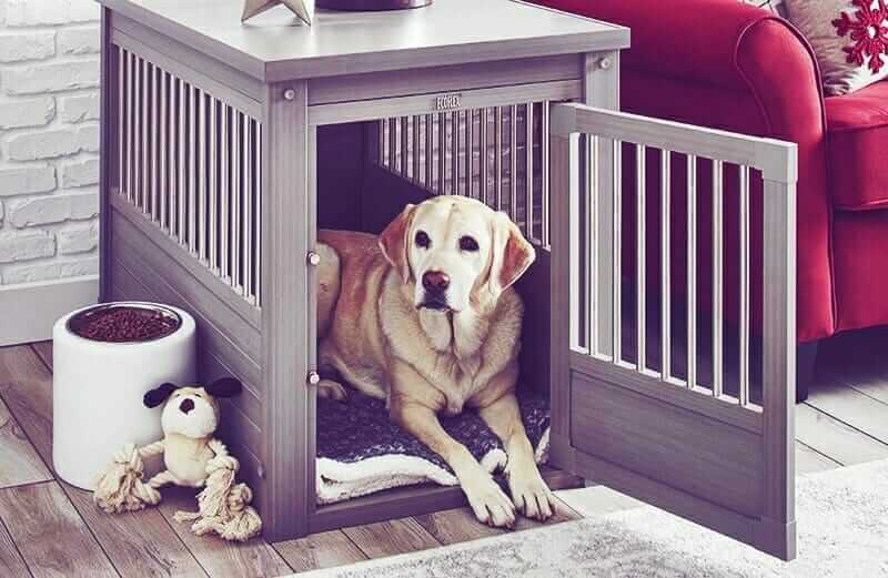 Dog In A Training Crate