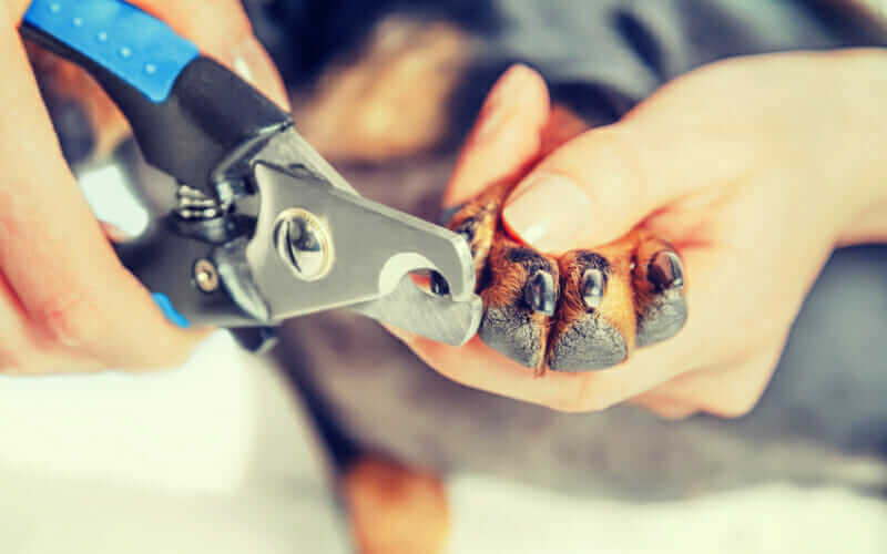 Best Dog Nail Clippers Of 2019 Dogviously