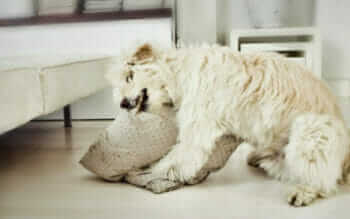 A Dog Destroying A Pillow