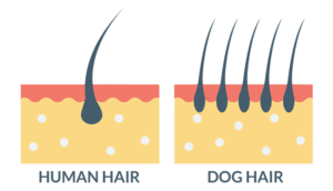 Human Hair VS Dog Hair