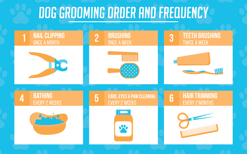 Dog Grooming Frequency Infographic