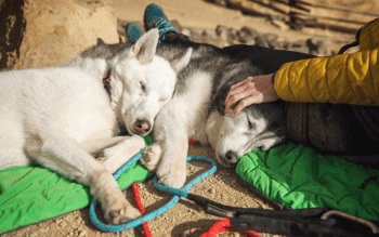 Best Dog Travel Beds Featured Image