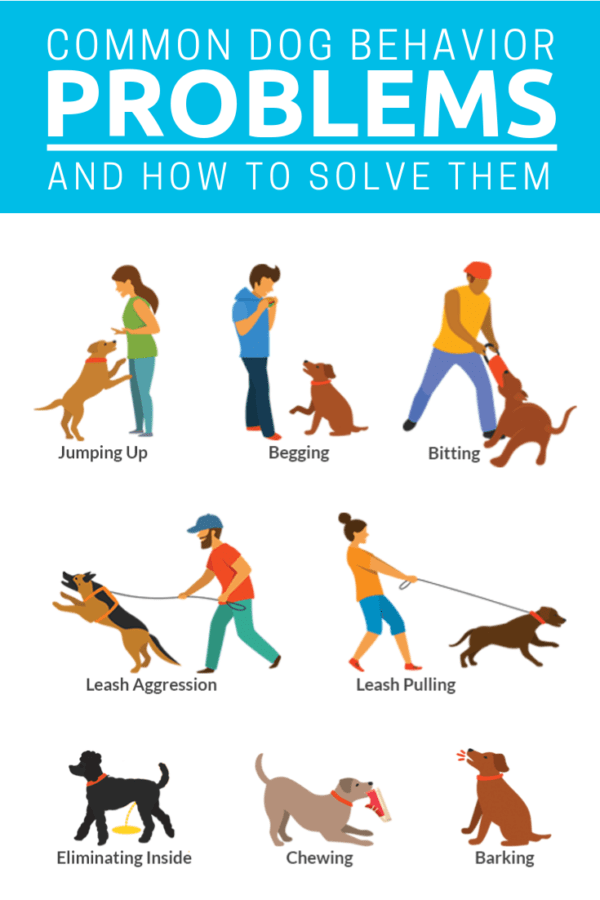 Common Dog Behavior Problems Pin