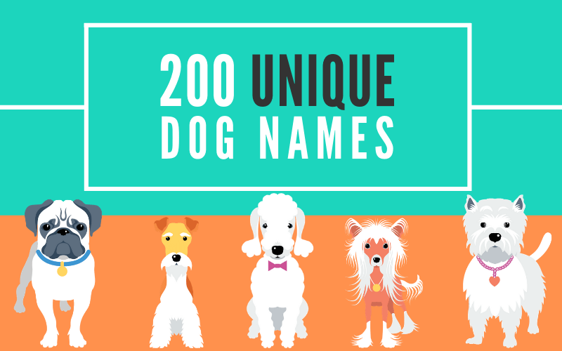 200 Unique Dog Names, Male And Female | Help Your Dog Stand Out