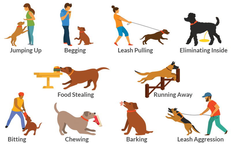 Common dog behavior problems