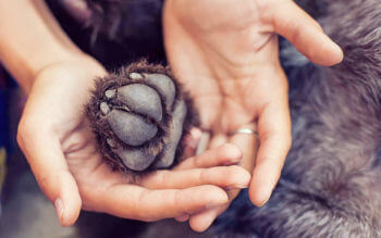 A Healthy Dogs Paw Held In A Womans Hands