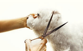 Best Dog Grooming Scissors