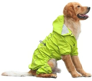 Featured Best Four Legged Dog Raincoat