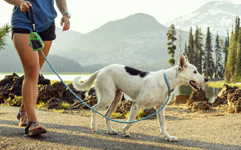 Best Dog Slip Leashes