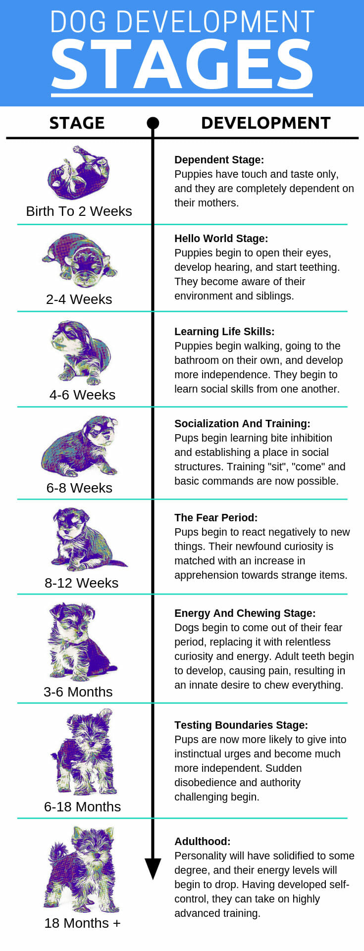 Developmental Stages Of Puppy Growth